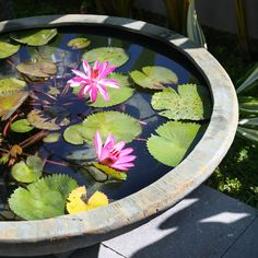 Close up of water bowl from Spa Living as seen in Modern Garden Magazine