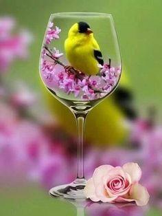 Beautiful Rose Flowers, Amazing Flowers, Beautiful Birds, Beautiful Images, Pattern Photography, Cute Photography, Creative Photography, Girly Dp, Wine Glass