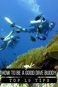 The best way to make friends while doing scuba diving (and stay safe of course) is to learn what makes a good dive buddy! #Scubadiving #scuba #diving #diver Scuba Diving Gear, Snorkelling, Underwater Photography, C'est Bon, Ocean Life, Marine Life, Travel Inspiration, Adventure, Stay Safe