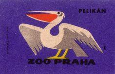 Prague Zoo: pelican by oliver.tomas, via Flickr