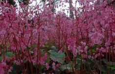 Soroa's Orchid Garden