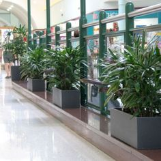 Troughs - Eco Green Office Plants Inside Garden, Roof Terraces, Green Office, Eco Green, Office Plants, Balcony Garden, Plant Decor, Garden Ideas, Pots