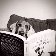 Sorry to interrupt your reading!