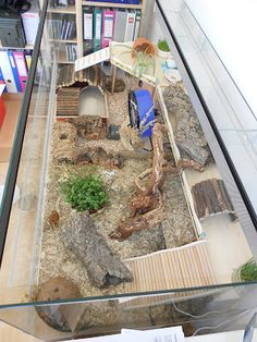 Near-natural hamster enclosure: x terrarium for Dsungare Sir Humphrey / COULD . - Natural hamster enclosure: x terrarium for Dsungare Sir Humphrey / COULD BE FOR A BEARDE - Hamster Diy Cage, Gerbil Cages, Hamster Toys, Pet Cage, Bartagamen Terrarium, Terrarium Reptile, Habitat Du Hamster, Hedgehog Habitat, Hermit Crab Habitat