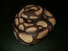amylenore paint rocks | Handpainted Rock Art - Realistic Ball Python Snake - Unique Garden ...