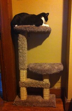 DIY cat tree!