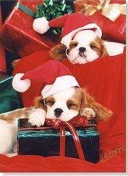 Christmas cavalier pups