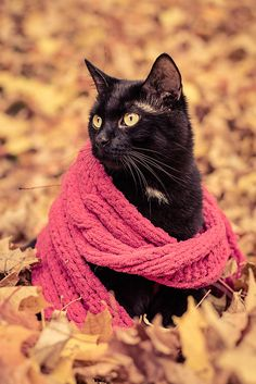 15 Hilarious Cats In Scarves | nexter