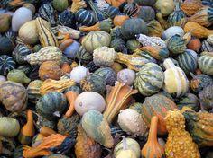 Gourds galore! www.fiskars.com