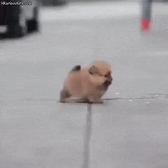 Adorable little puppy chasing feet | HilariousGifs.com