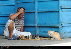 Nordin Seruyan #chess #cat http://www.pinterest.com/smilingtimes/smilingtimes/