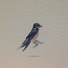 Day 104 : The young barn swallows that are born in Ireland make the long journey to South Africa at just three months old. This one's for Francesca, whose Irish wit and humour got me through the toughest bits of my MA. Happy birthday Frannie. 22 x 24 mm. #365paintingsforants #barn #swallow #ireland (at Vredehoek)