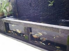 one small section of the fish pond will have a see through wall