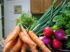 """After harvest can bea really frustration time. Once wehave harvested the vegetables we'vechosen to grow weare left with a barren spot in the garden. It can often be irritating to keep weeding and keeping up with a patch of garden that doesn't have anything growing in it. So, a great way to keep this<a href=""""http://www.myyardgarden.com/five-fast-growing-vegetables/"""" title=""""Read more"""" >...</a>"""