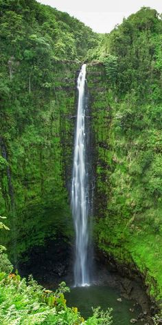 Akaka Falls, The Big Island! Click through to see 27 of the best things to do in Hawaii!