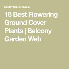18 Best Flowering Ground Cover Plants | Balcony Garden Web