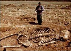 esqueleto humano real - Buscar con Google