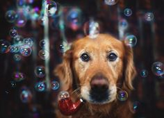 More Adorable Dog Portraits by Young Jessica Trinh - My Modern Metropolis