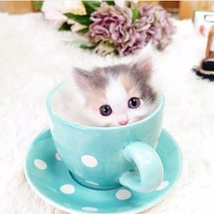 Kitten fits perfectly in a cup cute baby animals kittens cut Baby Kittens, Cute Cats And Kittens, Kittens Cutest, Pretty Cats, Beautiful Cats, Cute Baby Animals, Animals And Pets, Animals Images, Gato Grande