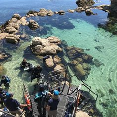 All I can say is wow! What a great morning!  The staff was awesome! The experience was awesome #wesandwill #wesleyslife #vaccineinjuryisreal💉 #underwateradventure #diving #monterey #montereybay #keviandlacey #summer2017 #montereybaylocals - posted by Kara Hallenbeck https://www.instagram.com/karahallenbeck - See more of Monterey Bay at http://montereybaylocals.com