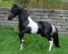 Miniature Horse -  Graham's Ragtime