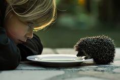 Hedgehog Eating Together With Child