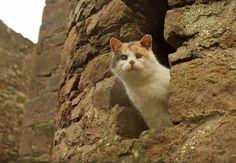 Aveugle, cette chatte sortie d'un refuge adore randonner avec son sauveur