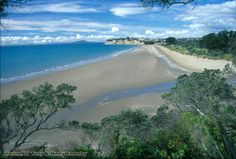 Long Bay - Auckland