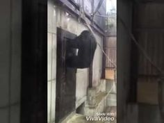 Funny chimp! Try not laugh 😁