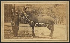 CDV of President Lincoln's horse, Old Robin draped in black on the day of Lincoln's Funeral in Springfield, Ill.