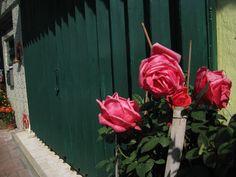 澳門街邊小花