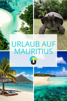 Mauritius ist ein Traumziel schlechthin. Besucht die schönsten Strände, macht einen Ausflug nach Gabriel Island, entdeckt die Kulturelle Vielfalt des Inselstaates, verbringt einen Tag im Botanischen Garten, plant eure Flitterwochen vor Ort und verpasst kein Highlight auf Mauritius! Ob Port Luis oder die Île aux Cerfs - hier ist ein Ort schöner als der andere.