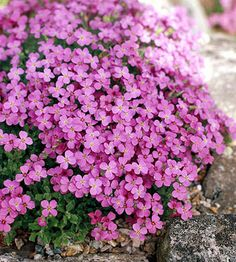 Let easy-growing groundcovers be the solution to your landscaping problems. Here are some of the best groundcovers for your yard.