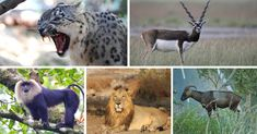 7 rare and exotic wildlife species that can be found in india - the better india Rare Animals, Animals Images, Animals And Pets, Funny Animals, Exotic Animals, Wild Animals, Animal Sketches, Animal Drawings, Animal Crafts For Kids