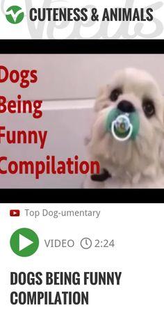 Dogs Being Funny Compilation - More videos here: and subscribe to my channel here: A funny poodle type dog screaming, a pug paddling in water, a Golden Retriever curling it's lip like Elvis, a mad p.. | http://veeds.com/i/bdrWjMOwanjJWHZC/cuteness/