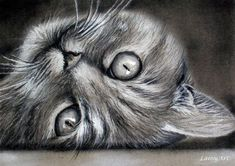 CUSTOM Cat Drawing from your photo 8x10 / Realistic by LainyArt, $100.00 :: https://www.etsy.com/shop/LainyArt #CatDrawing