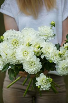 These white Dahlias, 'Bride to be', are perfect for bouquets and table arrangements all season long!These white Dahlias, 'Bride to be', are perfect for bouquets and table arrangements all season long! White Dahlia Bouquet, White Dahlias, White Wedding Bouquets, Dahlia Flower, Wedding Flower Arrangements, White Flowers, Floral Wedding, Wedding Flowers, Party