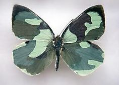 Wow! Even butterflies wear fatigues and camoflage!