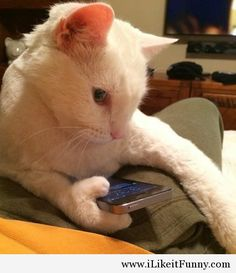 This cat has thumbs and uses an iPhone