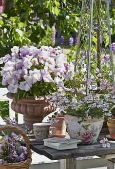 Krukker Container Plants, Container Gardening, Garden Mum, Cozy Cottage, Petunias, Garden Plants, Romantic, Nests, Creative