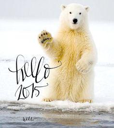 hello 2015 by HELLO calligraphy Małgosia Małecka Polar Bear, Calligraphy, Animals, Lettering, Animales, Animaux, Animal, Calligraphy Art, Animais