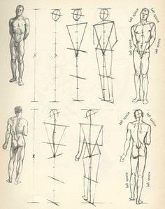 Instruction: Willy Pogany's Drawing Lessons – AnimationResource… – Serving the… - figure drawing Human Anatomy Drawing, Form Drawing, Gesture Drawing, Anatomy Art, Basic Drawing, Life Drawing, Drawing School, Drawing Poses, Figure Drawing Tutorial