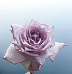"991d030a3bc1 My Violet | Sydney Florist on Instagram: ""DOMINGO💊 Buenos Dias."""