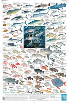 """Coastal Fishes of Southern Africa - 2: Offshore""    (2010 Korck Publishing)"