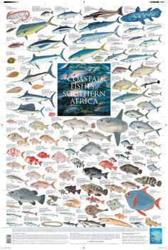 """""""Coastal Fishes of Southern Africa - 2: Offshore""""    (2010 Korck Publishing)"""