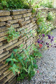 Eco Garden, Recycled Garden, Garden Deco, Edible Garden, Dream Garden, Garden Plants, Brick Garden, Garden Borders, Outdoor Plants