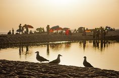 Sunset In The Beach with seagulls