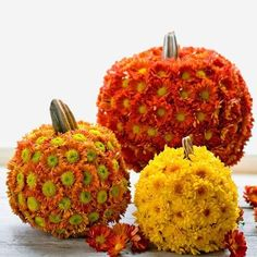 "So cute & pretty, I love Fall!  INSTRUCTIONS:    Step 1: Use an awl (#12363) to poke holes, approximately 1/2"" apart, around the entire pumpkin.    Step 2: Cut blooms with 2"" to 3"" stems off the plants. Strip leaves from the stems. Larger pumpkins will need around 120 blooms to completely cover them; smaller pumpkins need about 100 blooms.    Step 3: Stick blooms in the holes. The moisture from the pumpkin flesh will keep your ""mumpkin"" looking good for 3 to 4 days"
