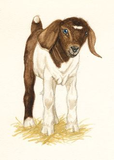 Baby Boer Goat Kid ACEO Farm Animal Mini Art by SaylorWolfWorks  #goatvet