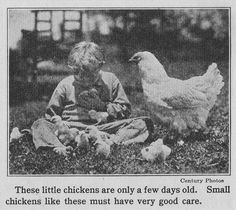 Spring chickens. My mom loved raising chickens. As kids, we loved the chicks.